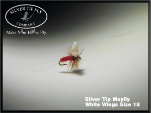 Silver Tip May Fly White Wings Size 18